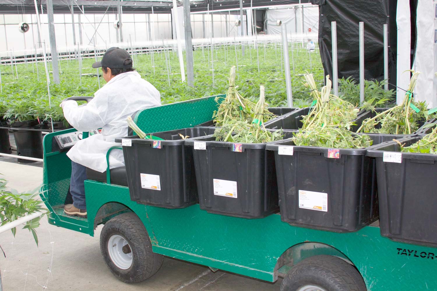 Worker driving a cart with plants
