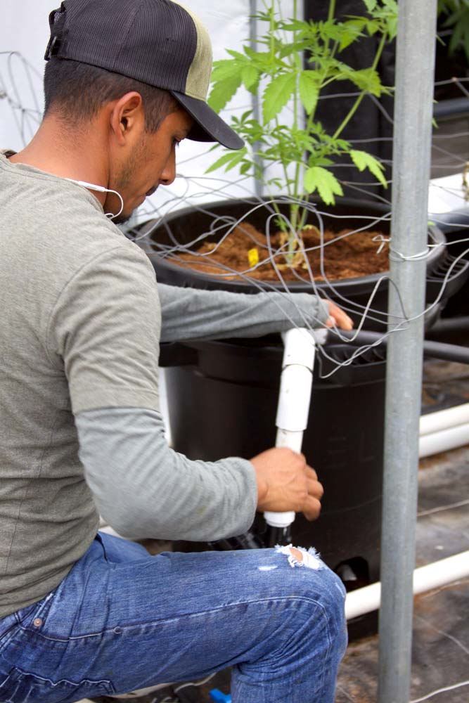 Worker working on irrigation